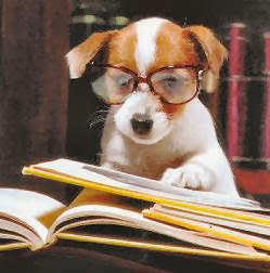 chien-a-lunette-livre